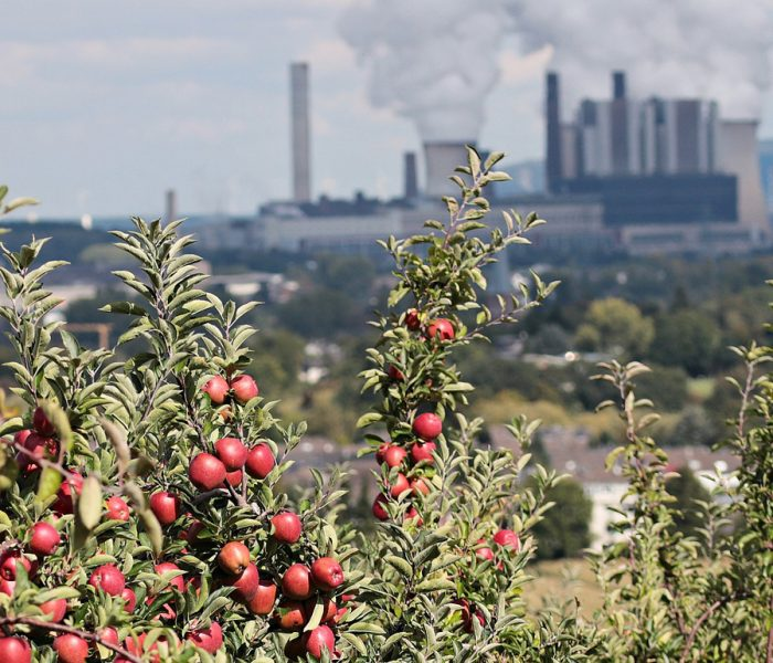 Zum 40. Jubiläum lädt das Öko-Institut mit einem Katalog wissenschaftlich abgesicherter Ideen für eine nachhaltige Zukunft zum gesellschaftlichen Diskurs. Symbolbild Apfelbaum, Kraftwerk.