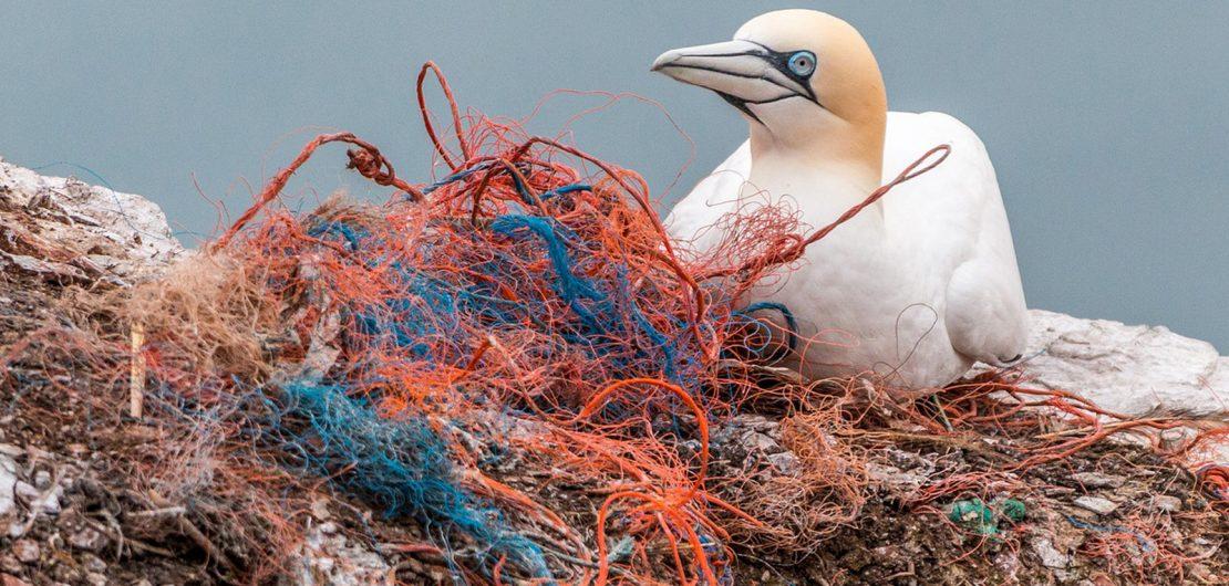 Symbolfoto zum RGBMAG-Artikel: Nachhaltigkeit: Neues vom Planeten Plastik; Vogel mit Plastikmüll, Fischernetz