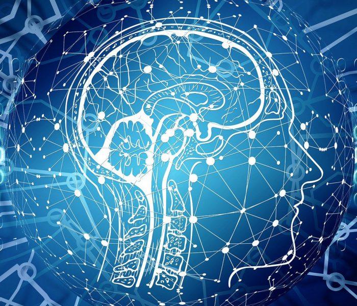 Das Gehirn entscheidet, wie wir die Welt sehen und wer wir sind. Kann uns Hirnforschung irgendwann zu einer friedlicheren Spezies machen?
